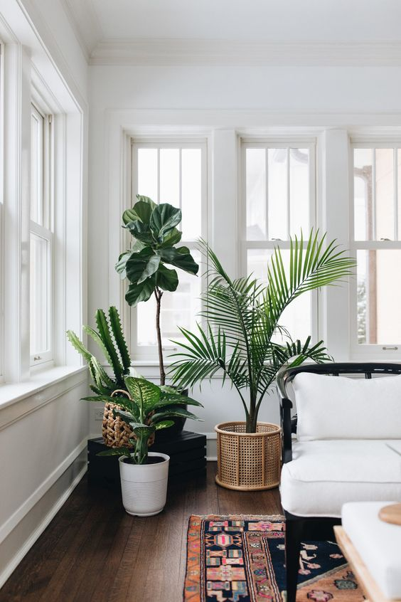 Decorative plant can be applied in the cozy eclectic design