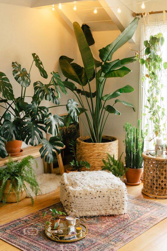plants in meditation room