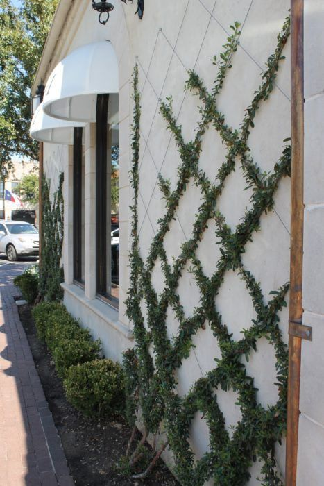 Vine as decoration for making eclectic home exterior