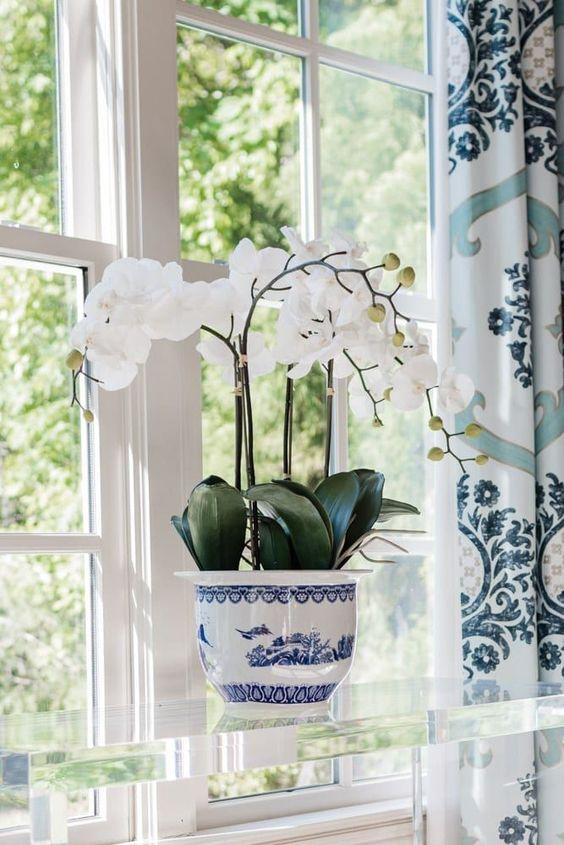 Orchild plant
