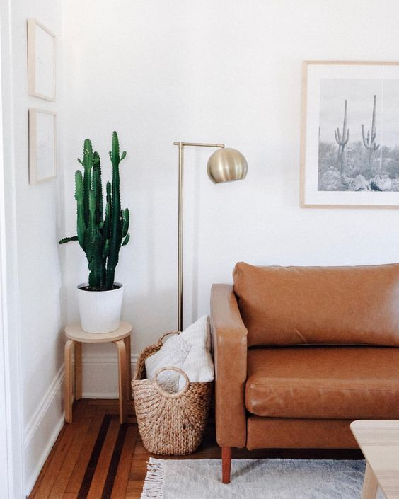 Cactus for living room