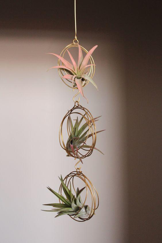 Eclectic plants decorations