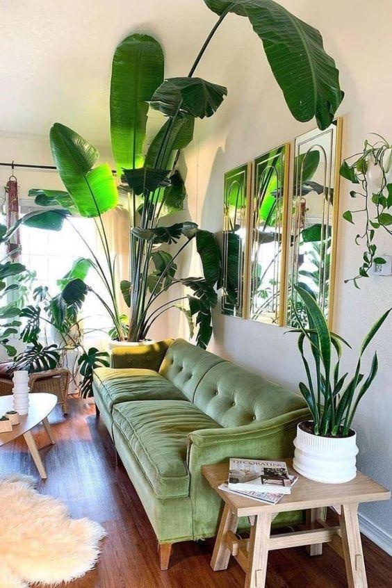 Green sofa with big plants