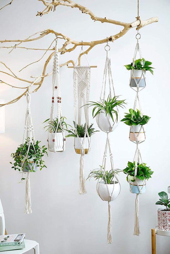 Bohemian plants